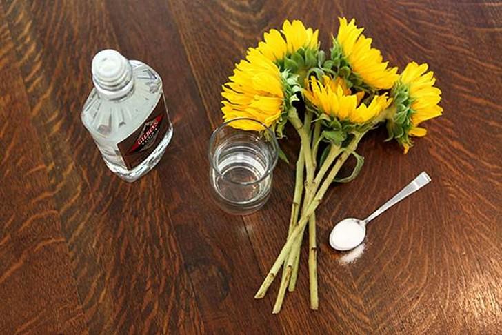 Водка как подкормка для комнатных цветов