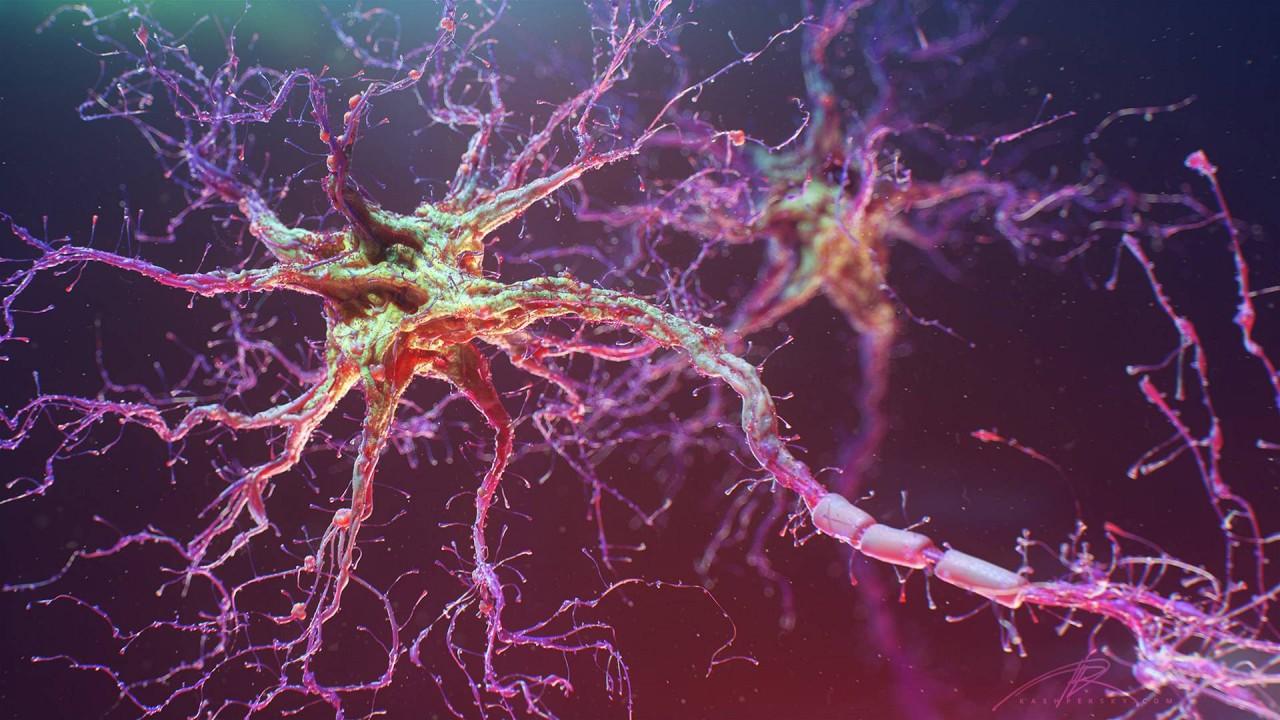 Нервные клетки не восстанавливаются – миф или реальность