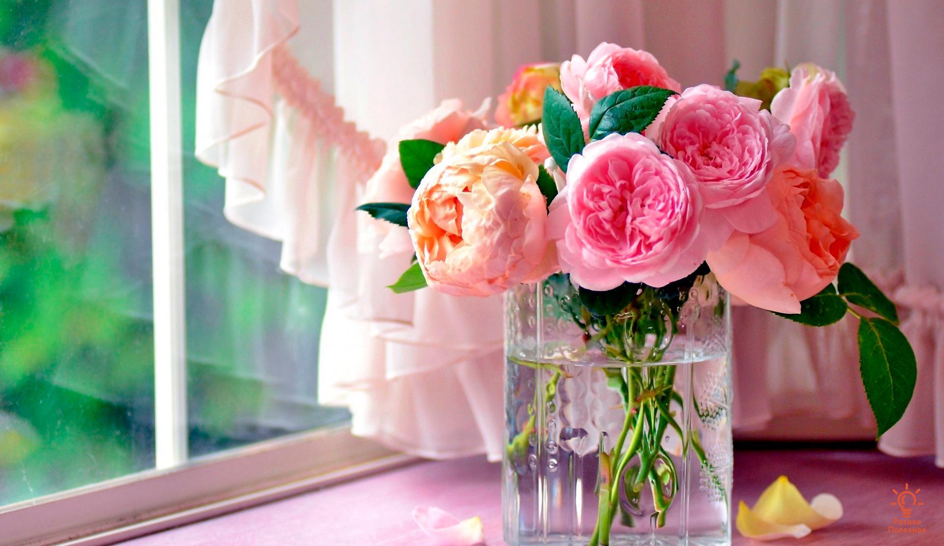 Как сохранить цветы в вазе – подкормка свежесрезанного букета