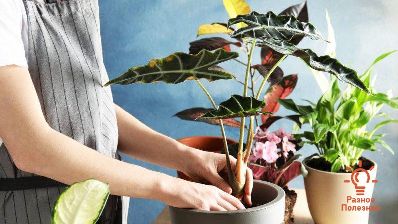 Как убрать белый налёт на почве в цветочных горшках