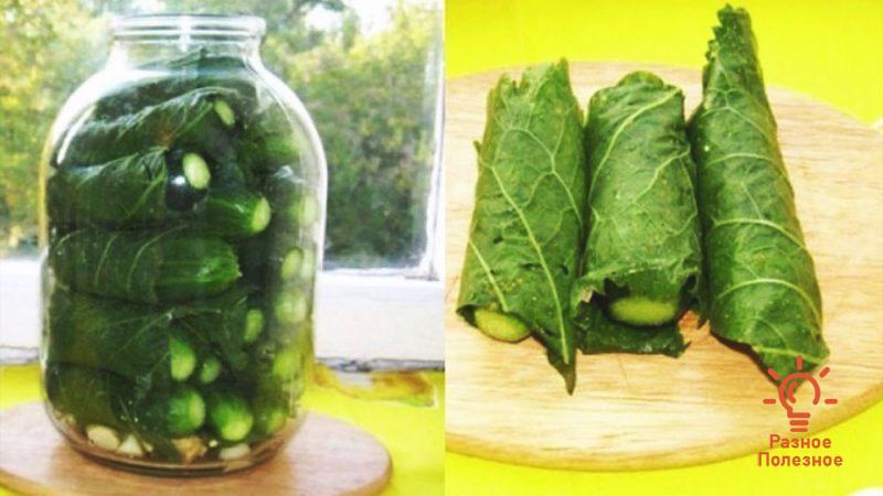 Огурцы в листьях хрена. Рецепт на зиму